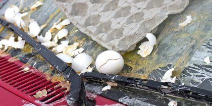 cars-egged
